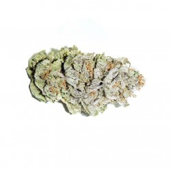Super Siver Haze